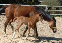 april 21 2008 filly by Most Welcome x Tempi (Final Appearance)