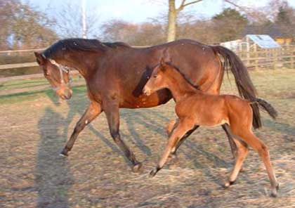 Relate (Distant Relative) with her 2009 colt foal by Lateral
