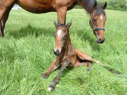 2009 colt foal by Academy Award x Tempi by Final Appearance
