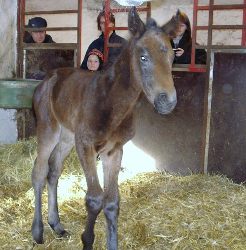 2010 filly foal by Academy Award x Lumen by Verglas