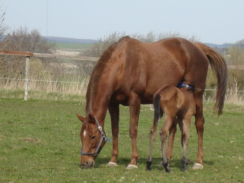 April 25, foal 2 days old by Academy Award x Ikon by Cajun Cadet