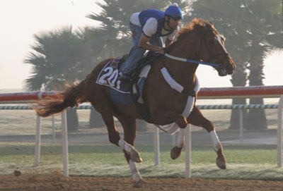 Curlin works on Nad Al Sheba