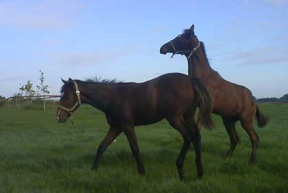 Park Dancer & Irish Hawk (nearest the sky)