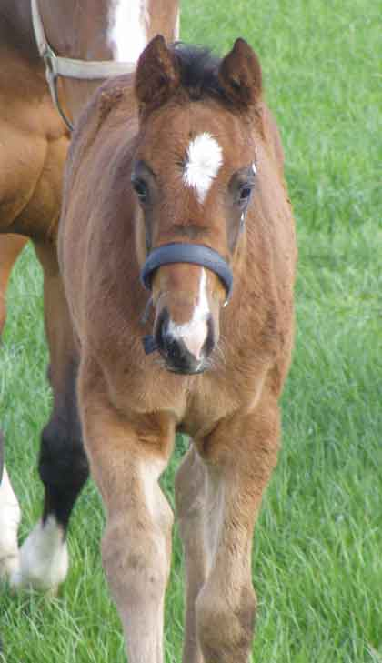 Park Dancer 2nd May ( born 20th March 2008)