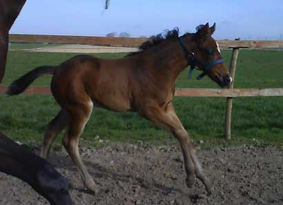 Park Dancer (Final Appearance x Park Lane by Quilted x Empress) 5 weeks old