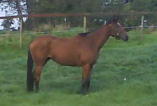 Queen Mambo (Richard of York x Gypsy Singer by Kingmambo)