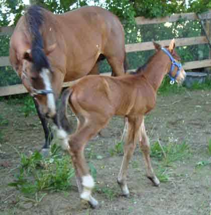colt foal born 2009 by Final Appearance x Satanic by Botanic