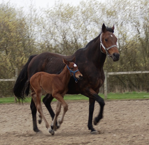 Areydha (Cadeaux Genereux) and her 2010 foal by Final Appearance (Sadler's Wells)