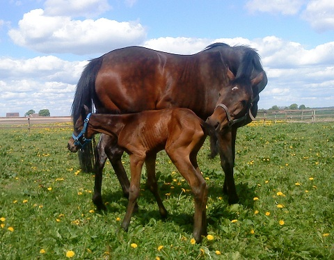 Filly foal born 20100527 by Academy Award x Chalet by Singspiel. 2 hours old