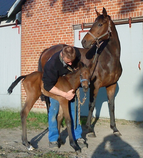 Filly foal born 20100527 by Academy Award x Chalet by Singspiel. 9 hours old