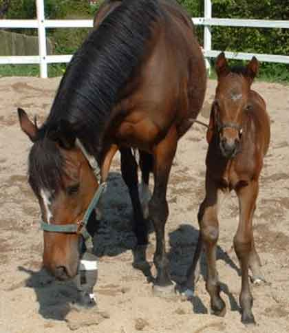 2008 filly by Cajun Cadet x Alacrity